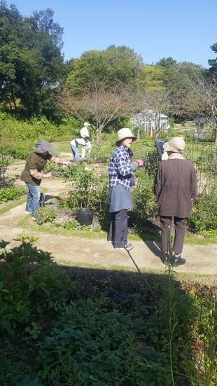 volunteers at work in Tokiwa park