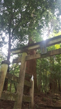 Torii to the forest